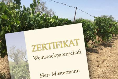 Weinpatenschaft Zertifikat Rebstockpate Muster Weingut Oliver Maibach Mallorca